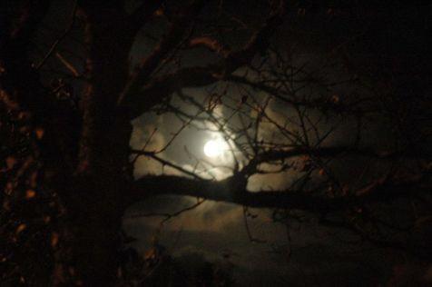 Photo of tree and moon at night
