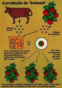Image courtesy of Jornal GGN- Image of the cow-tomato hybrid prank
